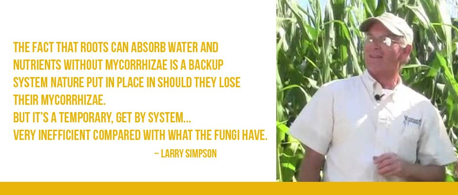 Larry Simpson in corn field.