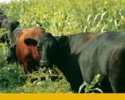 Bus Tour: Cattle strip grazing