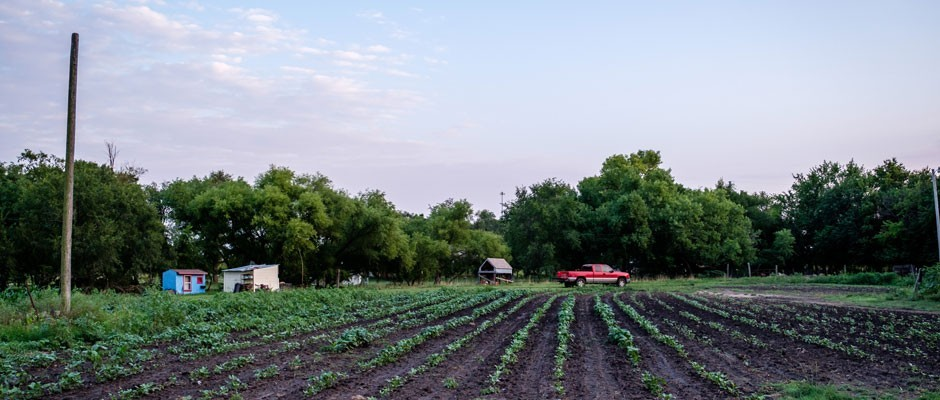 KFU's Produce Farm Twilight Tour: Common Ground Producers and Growers