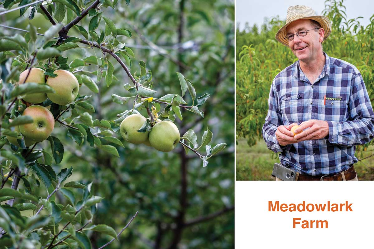 Tom Brown of Meadowlark Farm, a you-pick operation near Wichita, devotes about 20 acres to peaches.