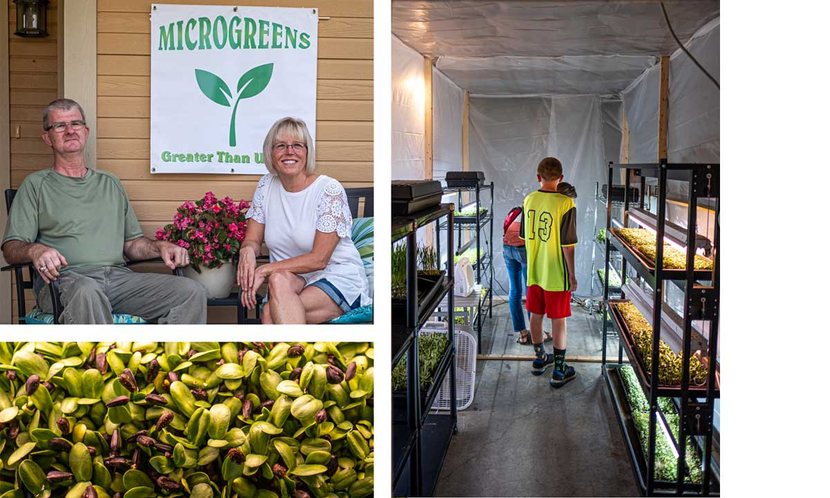 Mark and Donna Olson, Greater than U, grow sunflower sprouts and microgreens in their basement in Lansing.